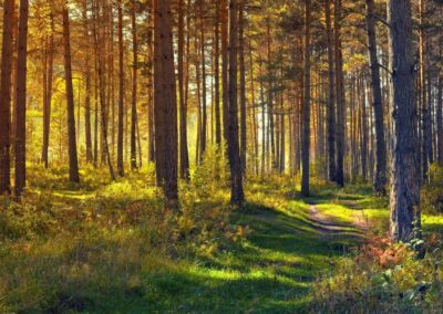 Das WaldWelt Labyrinth